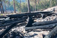 Burnt coupe near Wallagaraugh image